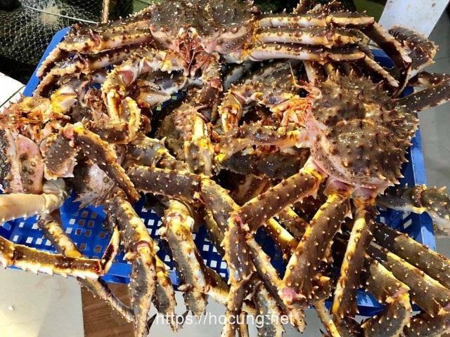 cua hoang de king crab